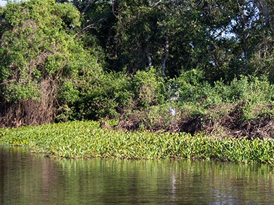 Operações de pesca investem também em ecoturismo
