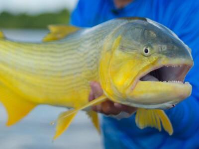 Cuidados de prevenção do Covid-19 no retorno para a pesca