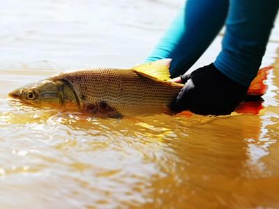 Workshop de Pesca Amadora e Esportiva acontece em Brasília