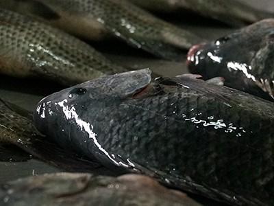 Workshop de capacitação comercial de pescados ocorre em São Paulo