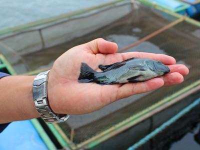 Feira Paraná contará com simpósio sobre aquacultura
