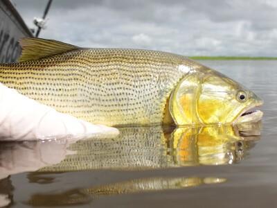 O que muda no turismo de pesca após vacina para o Covid-19