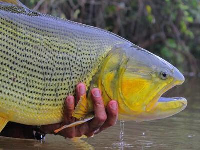 Documentário Brasiliensis está aberto no youtube da Fish TV