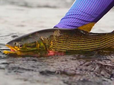 Licença de pesca recebe novo site para emissão