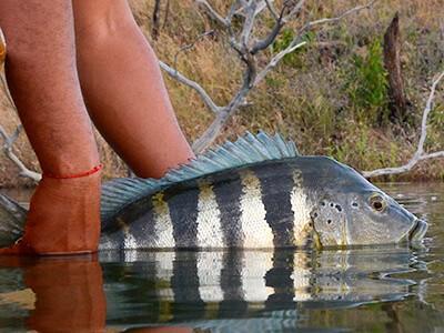 Turismo de pesca está reabrindo