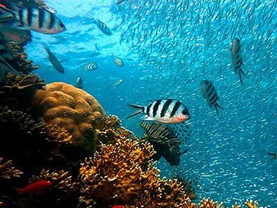 Iniciativa leva educação oceânica até escolas brasileiras