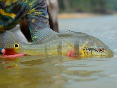 Pesca Esportiva: qual o papel para o desenvolvimento sustentável?