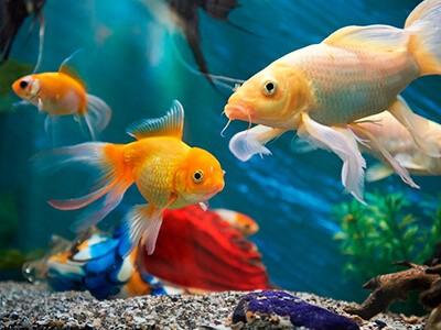 Primeiro aquário: quais os melhores peixes para começar?