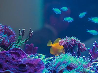 6 aquários incríveis para você ter em casa