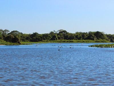 Pantanal: pesque em uma região cheia de aventura