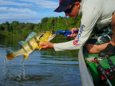 Onde pescar: Tucunaré o embaixador da pesca esportiva