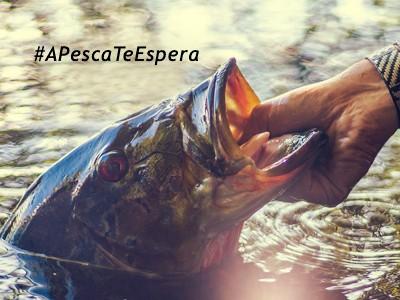 A pesca te espera