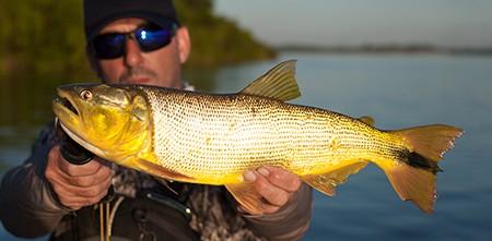 Pesca e Aventura: 3 Dicas do Gaba que você precisa ler antes da sua próxima expedição