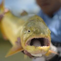 viagem, pantanal, fish tv
