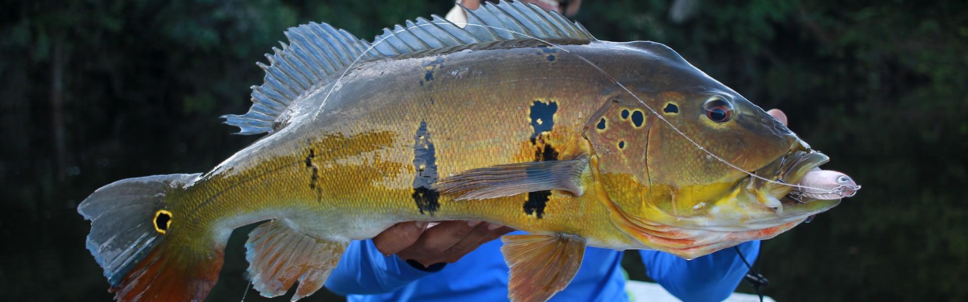 Pura Pesca