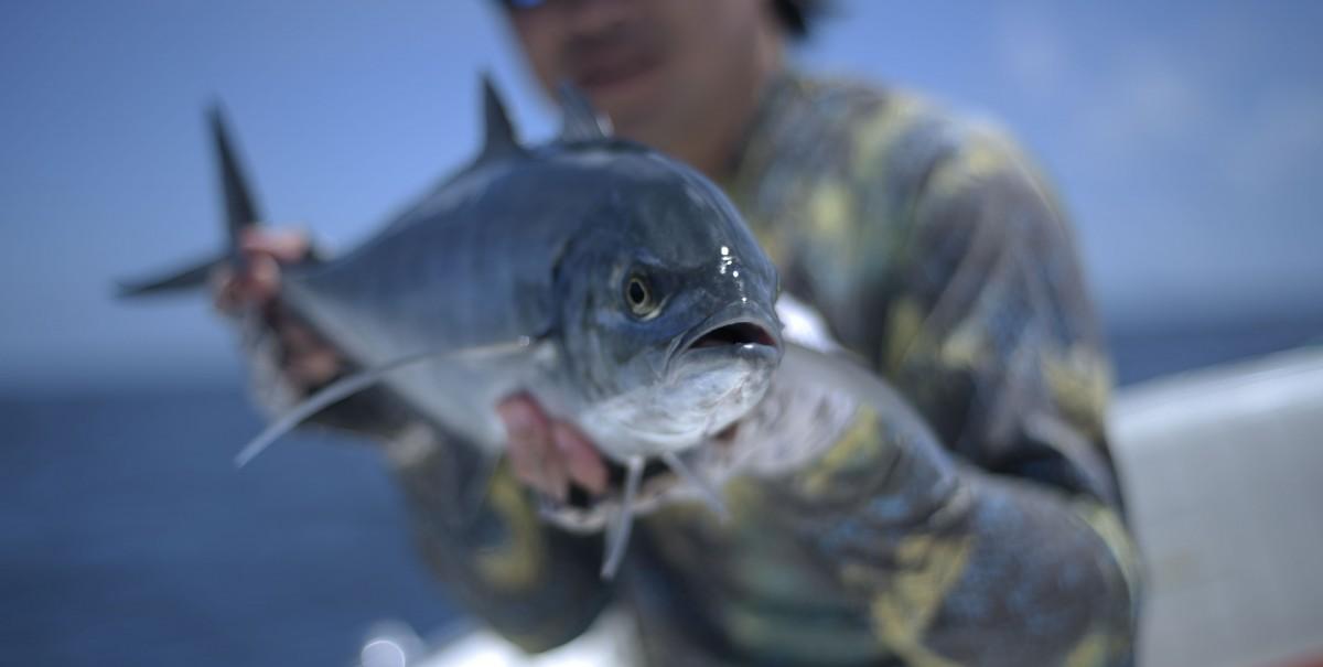 água salgada peixe lawrence fish tv