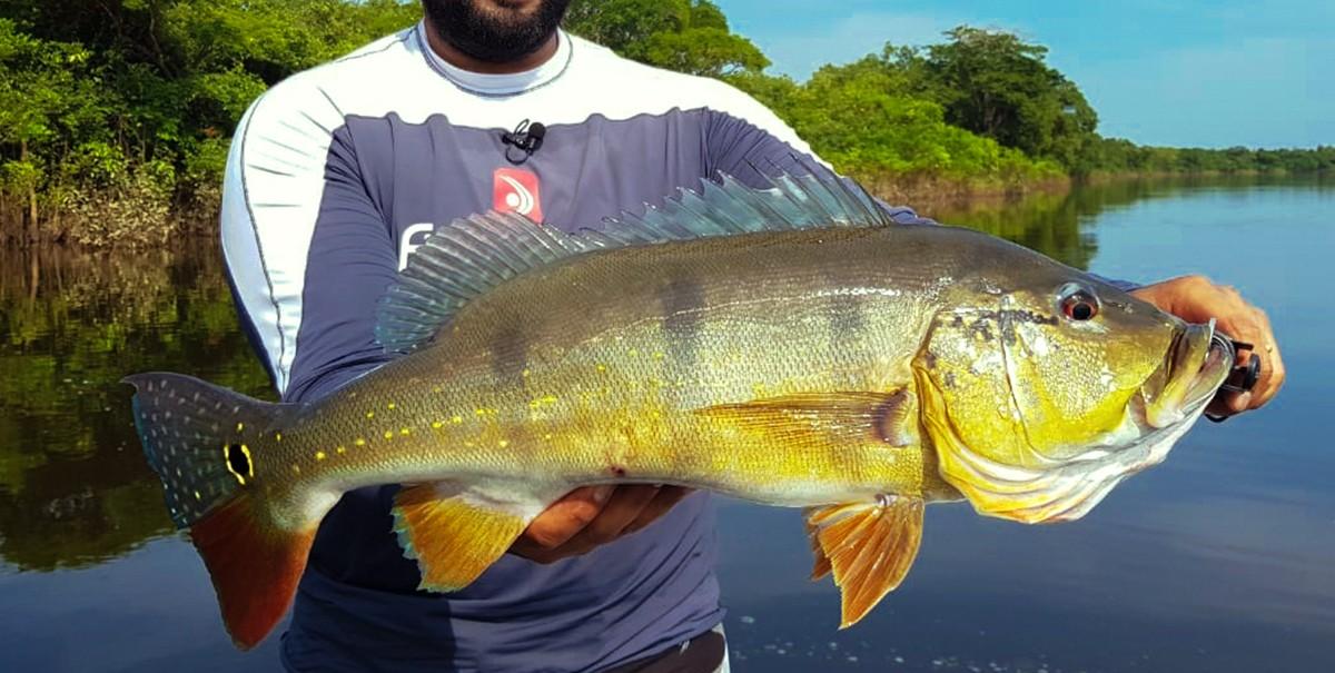 pescaria eduardo monteiro rio uatumã