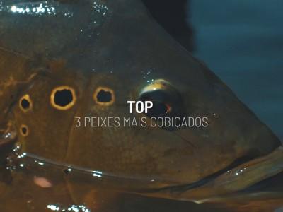 peixes, cobiçados, pescaria, tucunaré, fish tv