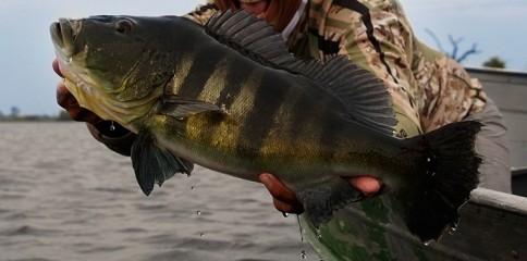 Tucunaré, pesca, Pasion por la Pesca, Fish TV